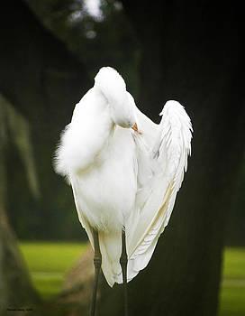 Egret Preening  by Palmer Hasty