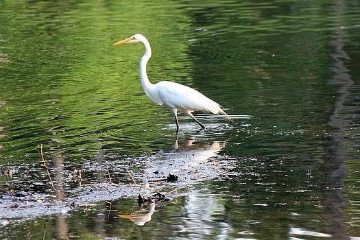 Egret by Robert Pennix