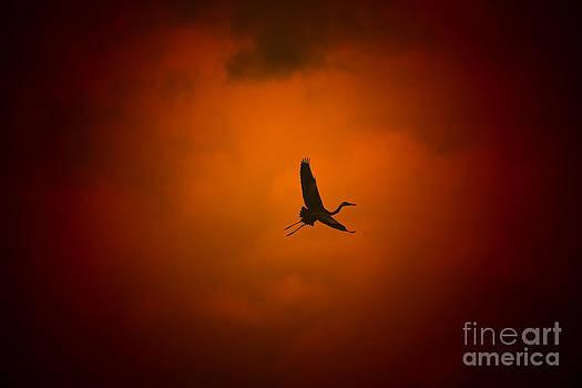 Hermanus A Alberts - Egret Sunset Storm