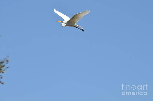 Egret Takes Flight by Kathy Vilim