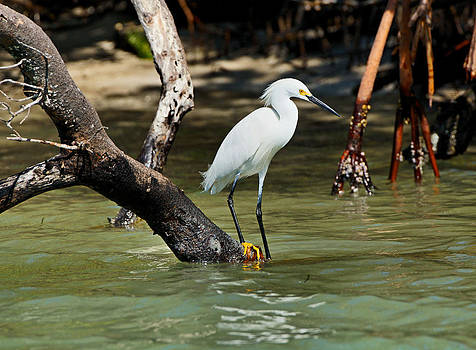 Egret Waters by Carmen Del Valle