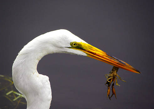 Egret with Crawfish by Palmer Hasty