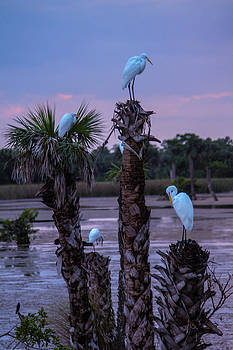 Egrets At Rest by Lesley Brindley