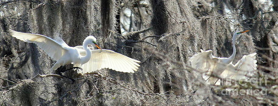 Egrets in Flight by Vicki Genna