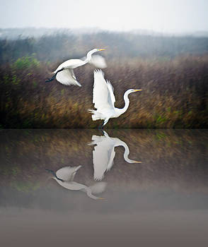 Egrets in the Fog by John Collins