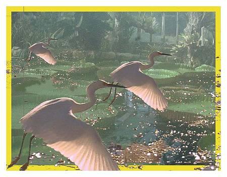 Carol Kay - Egrets over Lilypads