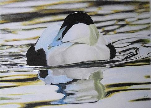 Eider Duck by Mike OConnell