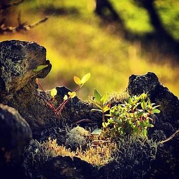 Beauty Nature. by Katalina Fuentes