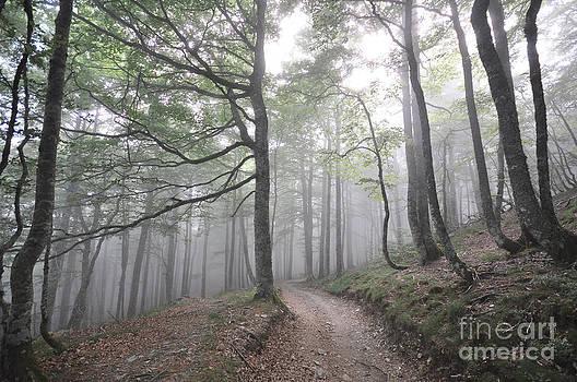 El Bosque Encantado by Sara Kennedy