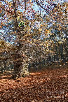 El bosque by Eugenio Moya