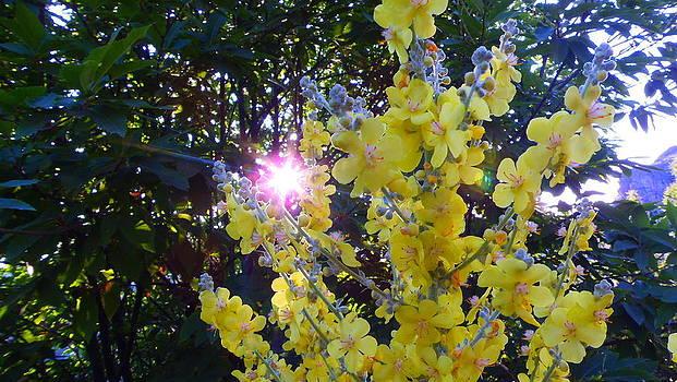 El Sol entre Flores by Nando Montes