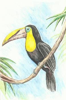 El Tropicano Toucan by Sue Bonnar