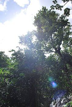 El Yunque Rain Forest by Catherine Kurchinski