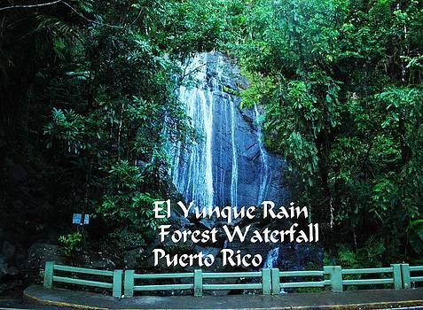 El Yunque  Waterfall by Gary Wonning