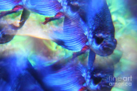 Electric Blue Fish Abstract by Sheri Dean