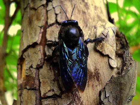 Electric blue fly by Salman Ravish