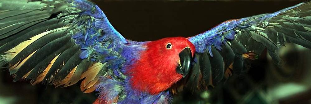 Electric Eclectus by Andrea Lazar