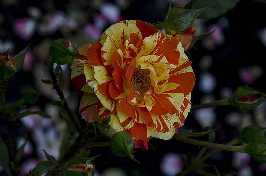 Elegance in Orange by Joie Cameron-Brown