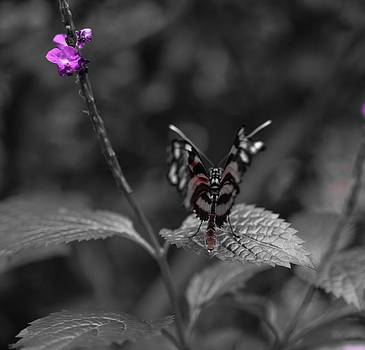 Elegant Butterfly by Chandra Wesson