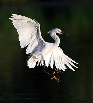Elegant Egret by Gary Michael Flanagan
