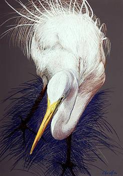 Elegant Egret by Kitty Harvill