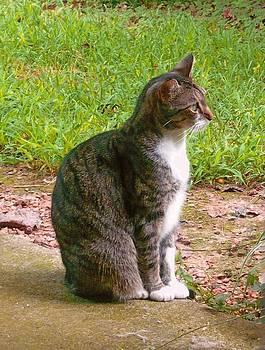Elegant Tabby Kitty by Vivian Eagleson
