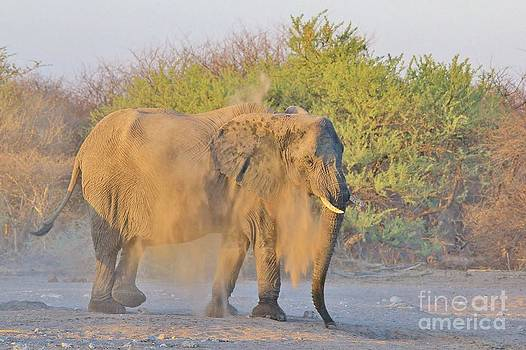 Hermanus A Alberts - Elephant - Dust Bath