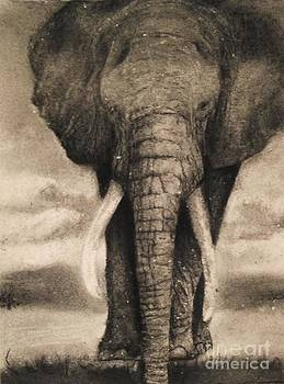 Elephant by Adrian Pickett