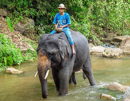 Randy Straka - Elephant and Mahout Thailand