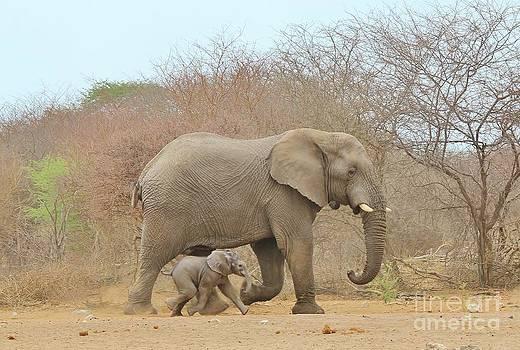 Hermanus A Alberts - Elephant Baby