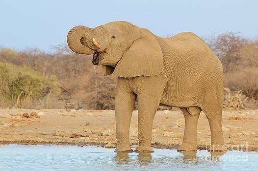 Hermanus A Alberts - Elephant bull pleasure