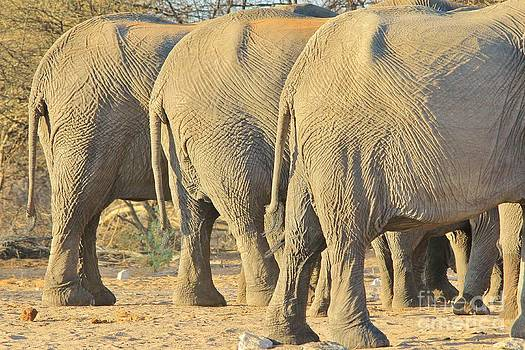 Hermanus A Alberts - Elephant Diet Clinic