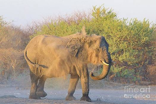 Hermanus A Alberts - Elephant Dust Bath 2