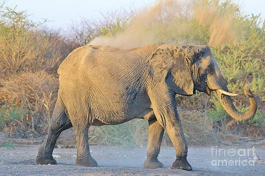 Hermanus A Alberts - Elephant Dust Bath 3