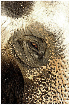 Elephant Eye by Keith May