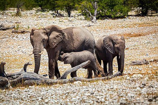 Katka Pruskova - Elephant Family in Africa