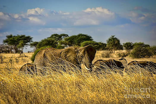 Darcy Michaelchuk - Elephant Family in the Grass