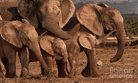 Elephant Family Portrait by Barbara Youngleson