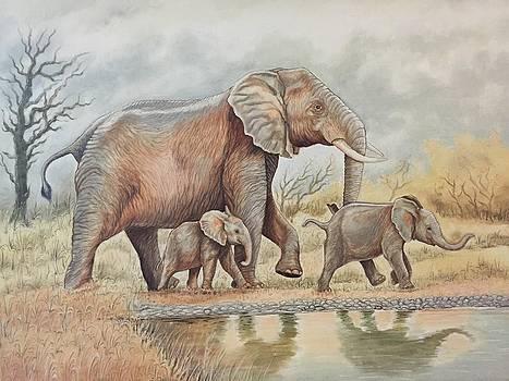 Elephant family  by Yash