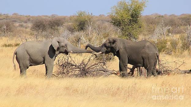 Hermanus A Alberts - Elephant Greeting