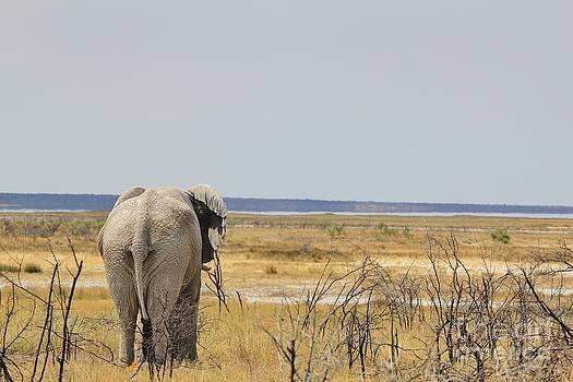 Hermanus A Alberts - Elephant Harmony