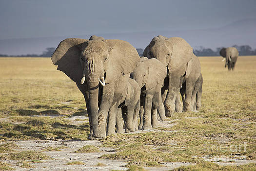 Elephant herd  by Richard Garvey-Williams