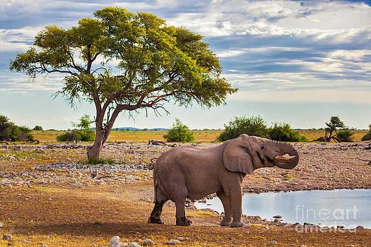 Katka Pruskova - Elephant in Africa I
