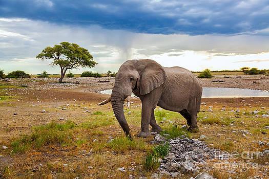 Katka Pruskova - Elephant in Africa II