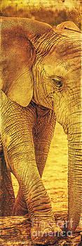 Elephant by Izabela Kaminska