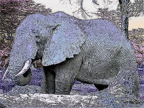 Elephant by Kathy Budd