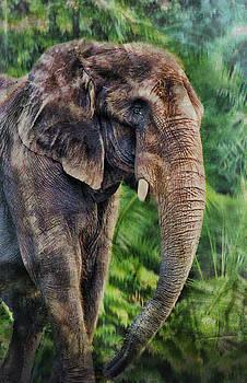 Elephant by Kathy Jennings
