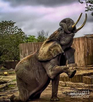 Elephant Kneeling by Jeremy Linot