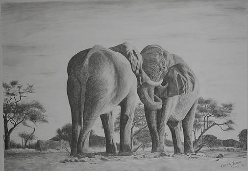 Elephant love by Casper Venter