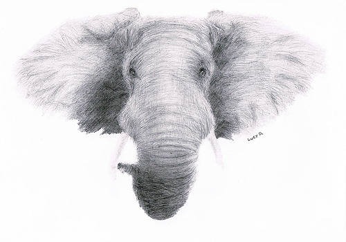 Elephant by Lucy D